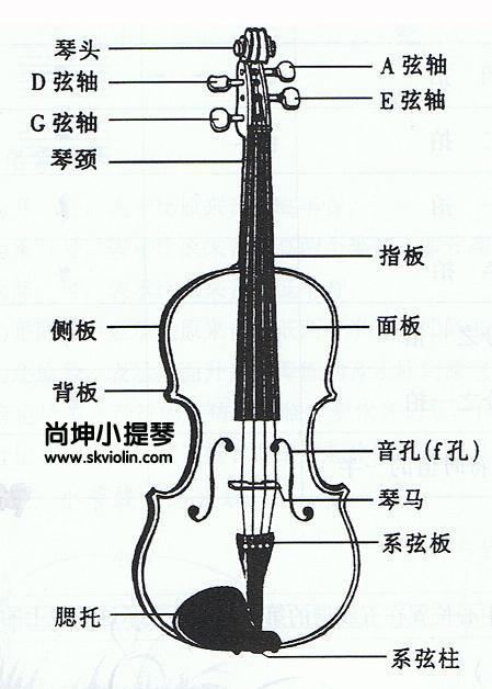 琴妃露_尚坤老师教你小提琴出现杂音的解决方法